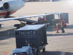 Roxie's crate being loaded onto a plane.