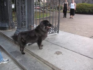 Roxie looking for cats in Jackson Square