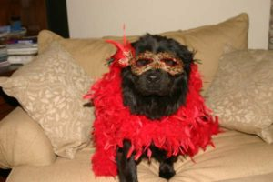 Roxie The dog in a red boa and mask